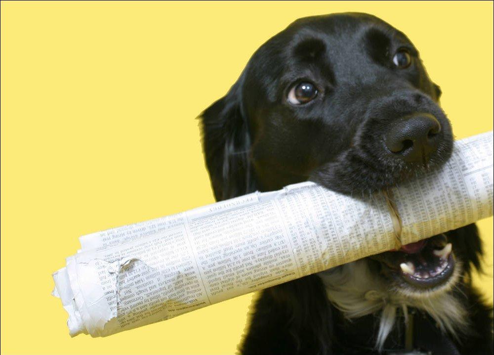Como ensinar o cachorro